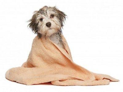 Tosquia e Higienização Animal