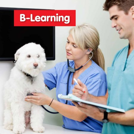 Auxiliar de Veterinária – B-Learning
